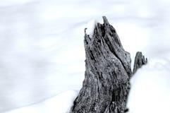 Tocón de árbol nevado Imagenes de archivo