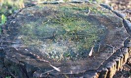 Tocón de árbol putrefacto viejo en el humor del otoño del bosque del otoño Concepto el marchitar y de la putrefacción Tocón de ár Fotos de archivo libres de regalías