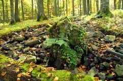 Tocón de árbol resistido   Fotografía de archivo