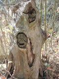 Tocón de árbol solo viejo Imagen de archivo libre de regalías