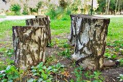 Tocón de árbol, tala de árboles Imagen de archivo