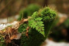 Tocón de árbol verde. Fotografía de archivo libre de regalías