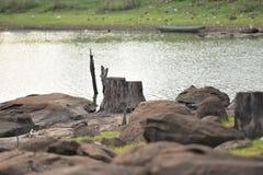 Tocón de árbol viejo Fotografía de archivo
