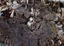 Tocón de árbol viejo Imagenes de archivo