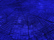 Tocón de árbol viejo - alerce, Foto de archivo