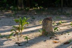 Tocón de árbol viejo en la selva con pequeño foto de archivo