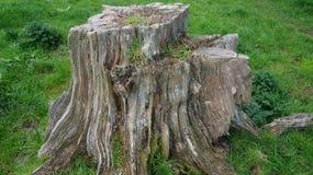Tocón de árbol viejo de la descomposición en granja imagenes de archivo