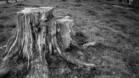 Tocón de árbol viejo de la descomposición en la granja de Nueva Zelanda fotos de archivo