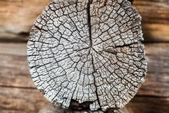 Tocón de Brown, mostrando edad, años de árbol Madera envejecida áspera Imagen de archivo libre de regalías