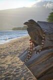 Tocón de la playa Foto de archivo