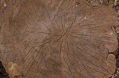 Tocón de madera Fotografía de archivo