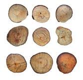 Tocón de madera aislado en el fondo blanco Árbol reducido redondo con los anillos anuales como textura de madera Foto de archivo libre de regalías