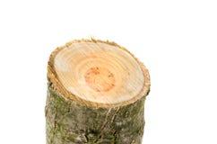 Tocón de madera aislado en el fondo blanco Fotografía de archivo libre de regalías
