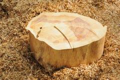 Tocón de madera grande. Imagenes de archivo