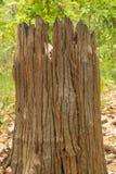 Tocón de madera muerto Foto de archivo libre de regalías