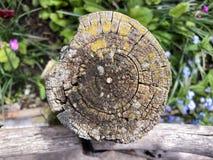 Tocón de madera putrefacto fotos de archivo