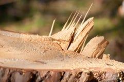 Tocón de un árbol Foto de archivo