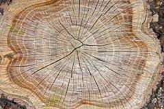Tocón del árbol imagen de archivo