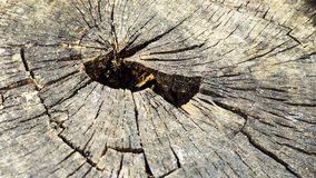 Tocón del árbol Fotos de archivo