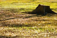 Tocón del abandono en jardín Fotografía de archivo