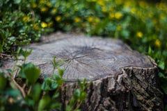 Tocón del bosque con las flores Foto de archivo libre de regalías