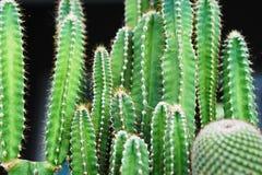 Tocón del cactus Imagen de archivo libre de regalías