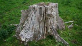 Tocón del pino de la descomposición en granja fotografía de archivo