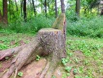 Tocón en bosque Fotografía de archivo
