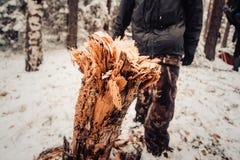 Tocón en el bosque Foto de archivo libre de regalías