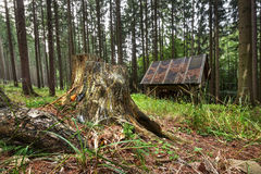 Tocón en el bosque y el estante de alimentación foto de archivo