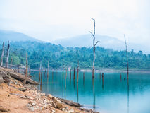 Tocón en el lago Foto de archivo