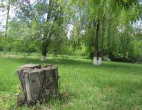Tocón en el parque Imágenes de archivo libres de regalías