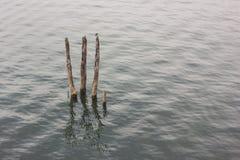 Tocón en el río Fotos de archivo