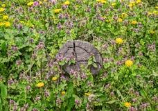 Tocón en la hierba verde imagen de archivo