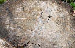 Tocón en la naturaleza de madera fotos de archivo