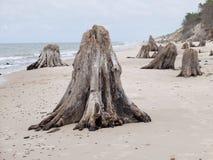 Tocón en la playa Foto de archivo libre de regalías