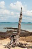 Tocón en la playa de la isla en Tailandia Imagenes de archivo