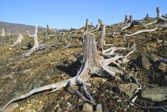 Tocón muerto de un árbol Imagen de archivo