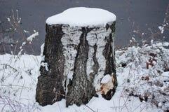 Tocón Nevado de un abedul Fotos de archivo libres de regalías