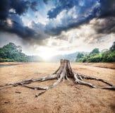 Tocón seco Foto de archivo libre de regalías