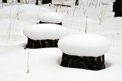 Tocón tres en sombreros de la nieve El bosque fue reducido Fotografía de archivo libre de regalías