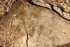 Tocón viejo en el bosque Fotografía de archivo