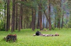 Tocón y chimenea en un bosque. Imágenes de archivo libres de regalías