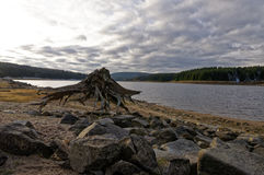 Tocón y piedras de árbol en la cama de río Imagen de archivo