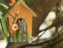 Toc toc - Chickadee Immagine Stock Libera da Diritti