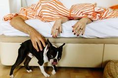 Tocando el perro en casa imagen de archivo
