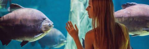 Tocchi della giovane donna un pesce di stingray in un'INSEGNA del tunnel di oceanarium, FORMATO LUNGO immagine stock libera da diritti