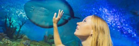 Tocchi della giovane donna un pesce di stingray in un'INSEGNA del tunnel di oceanarium, FORMATO LUNGO immagini stock libere da diritti