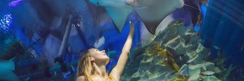 Tocchi della giovane donna un pesce di stingray in un'INSEGNA del tunnel di oceanarium, FORMATO LUNGO fotografie stock