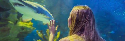 Tocchi della giovane donna un pesce di stingray in un'INSEGNA del tunnel di oceanarium, FORMATO LUNGO fotografie stock libere da diritti